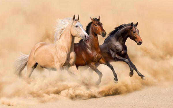 قدرت اسب